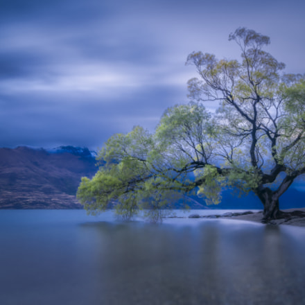 Queenstown Tree After Sunset, RICOH PENTAX 645Z, smc PENTAX-FA 645 35mm F3.5 AL [IF]