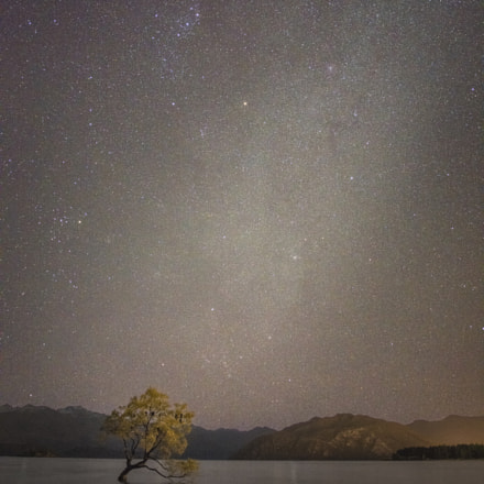Wanaka Tree and Milky, RICOH PENTAX 645Z, smc PENTAX-FA 645 35mm F3.5 AL [IF]