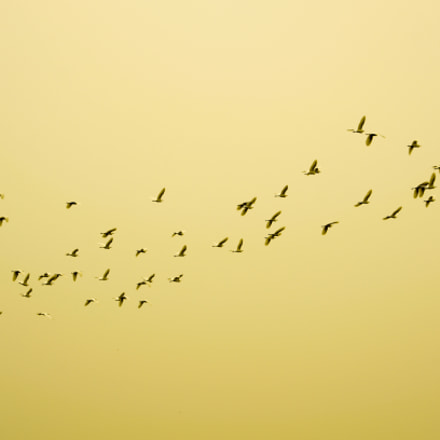 Birds, Pentax K-5, smc PENTAX-F 35-70mm F3.5-4.5