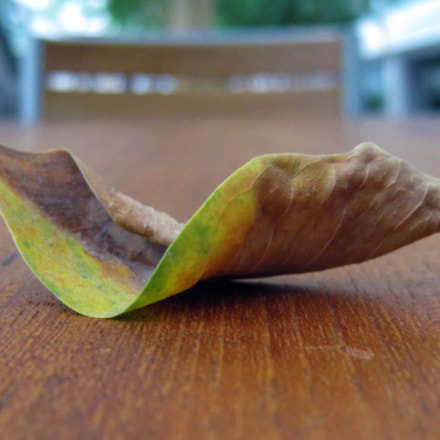 leaf on wood table, Canon POWERSHOT SD1200 IS