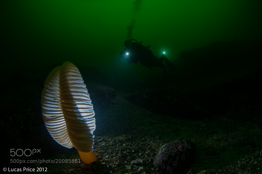 A diver and a lonely sea pen