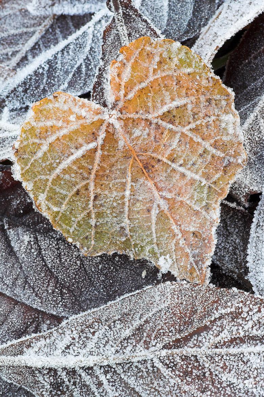Photograph Nel cuore dell'Inverno by Stefano Romanò on 500px