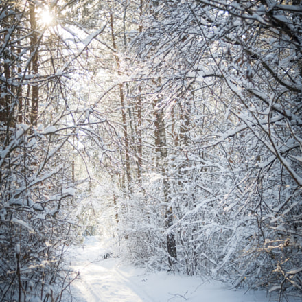 Winter in the forest, Canon EOS 5D, Canon EF 35-135mm f/4-5.6 USM