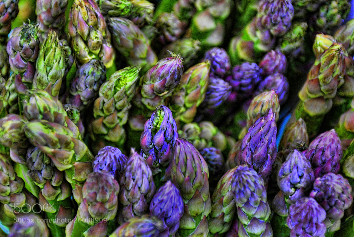 Photograph Asparagus Tips by Martin Pinker on 500px
