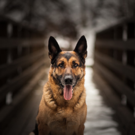 Tema, the dog with, Canon EOS 5D MARK II, Canon EF 135mm f/2.8 Soft