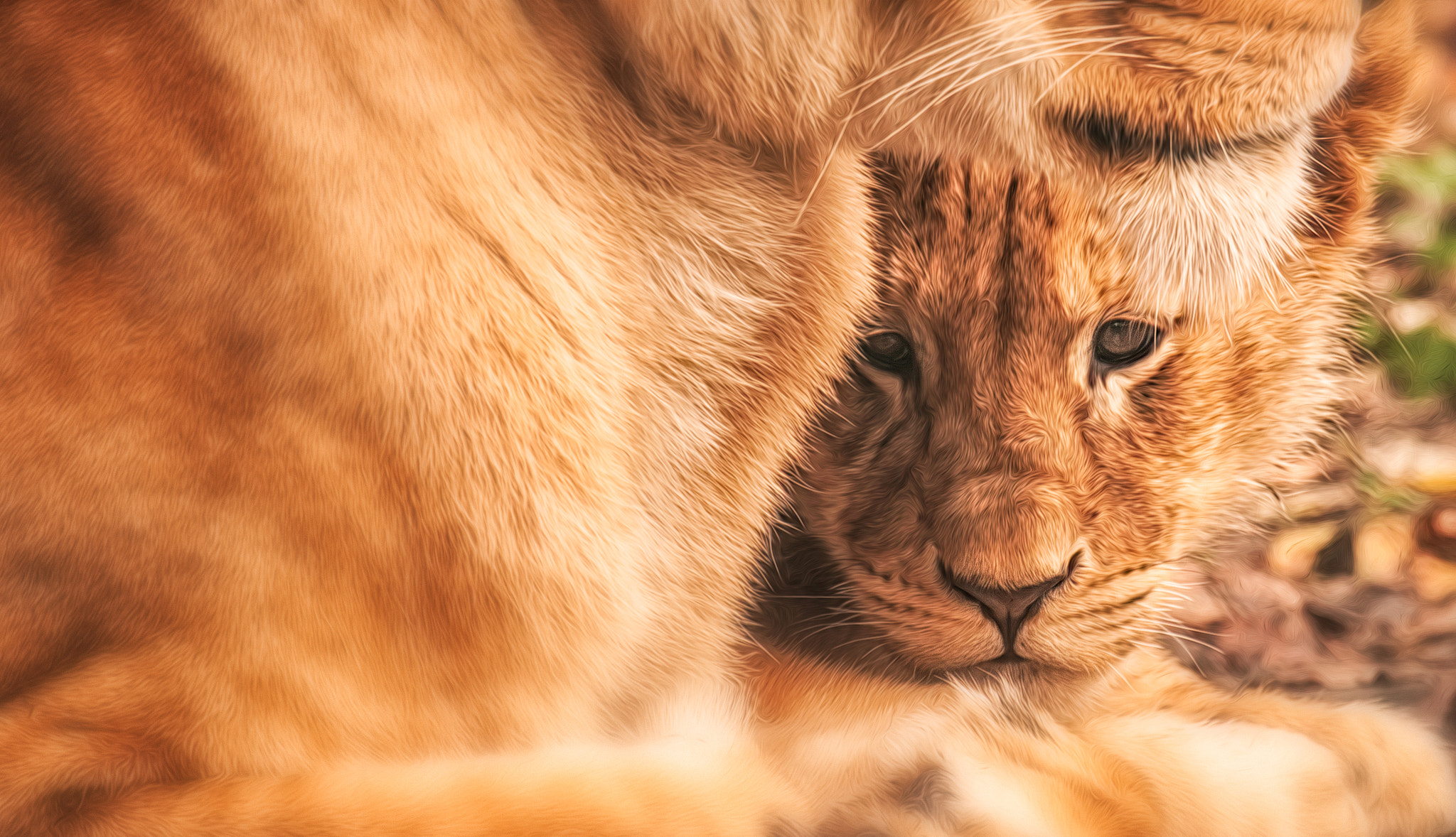 Photograph Protection by Denis Van Linden on 500px