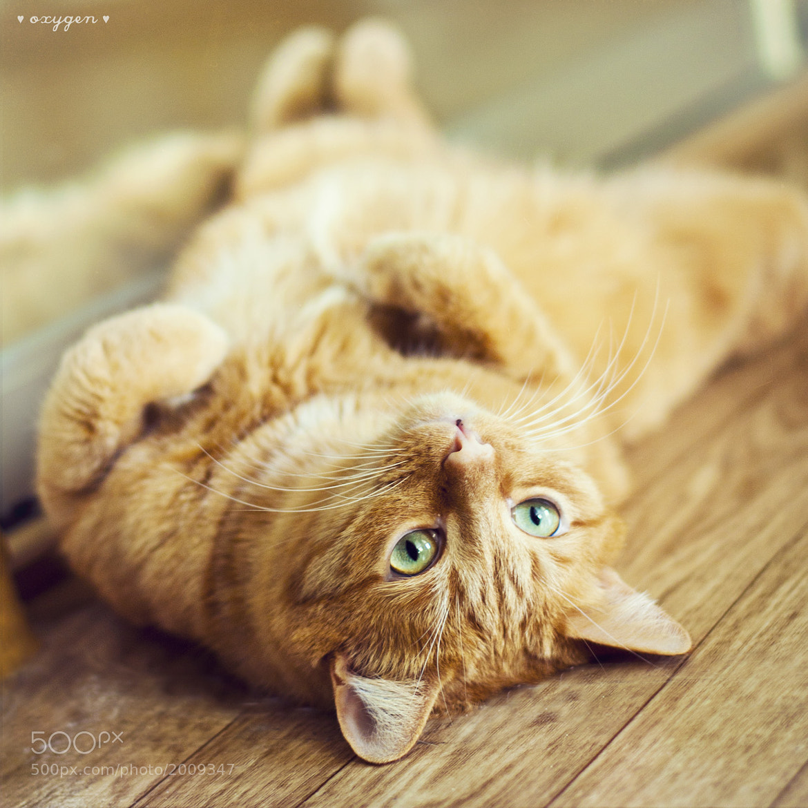 Photograph relax by Oksana Ariskina on 500px