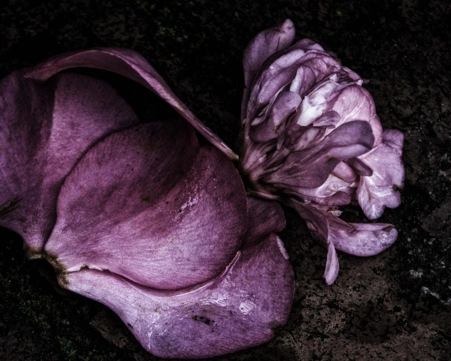 petals on the ground DSC