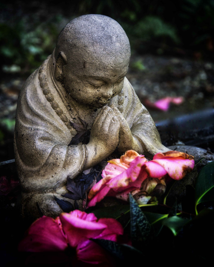 Budha and the decaying flower DSC
