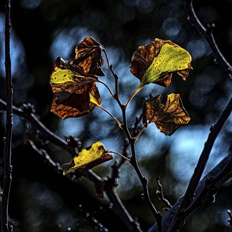hojas secas P