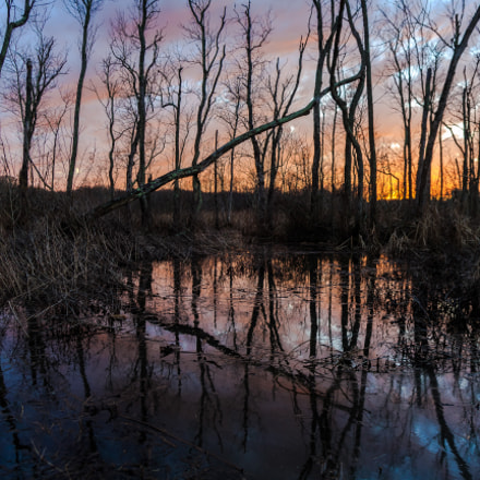 Piscataway NWR Maryland, Canon EOS-1D X, Canon EF 20-35mm f/2.8L