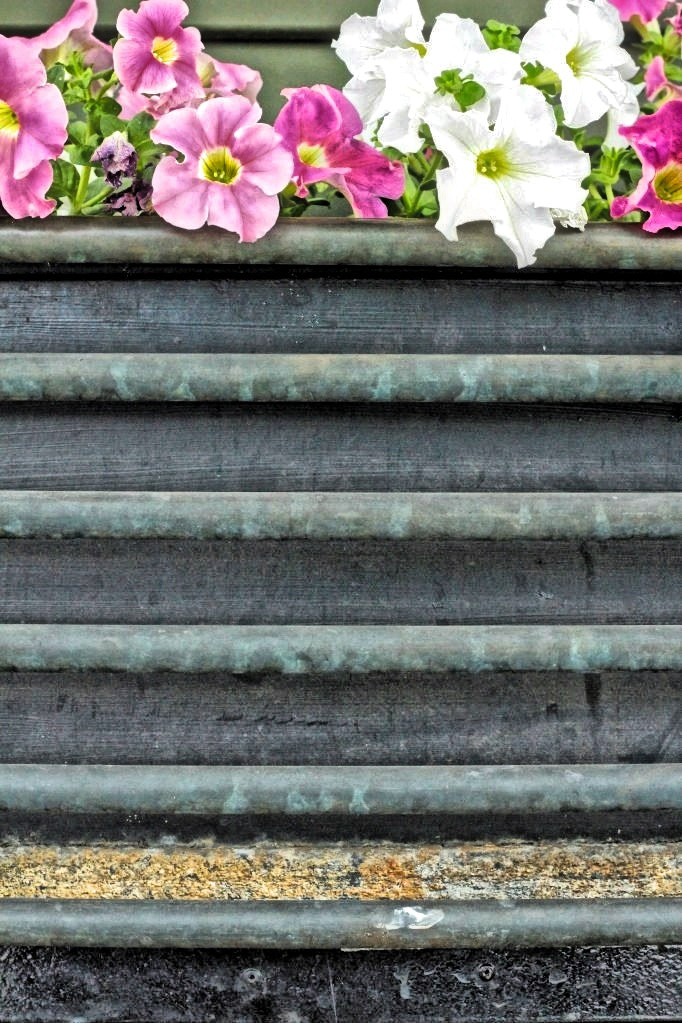 Photograph Not so lonely petunias  by Diane  Lee on 500px