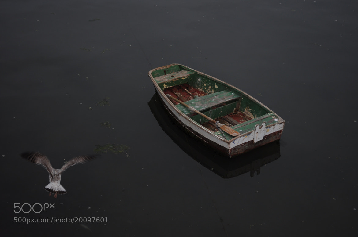 Photograph The boat and the seagull by José Eusébio on 500px