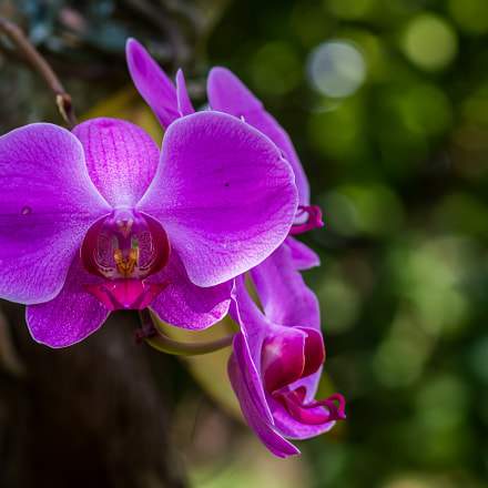 A close look at a beautiful orchid...