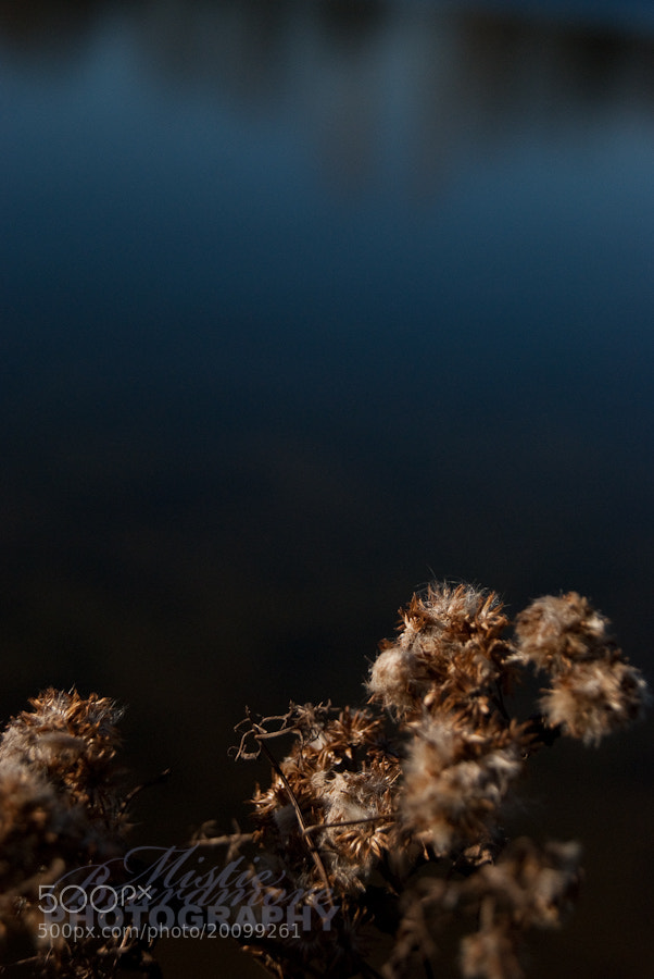 Photograph Weeds 2. by Mistie Beardmore on 500px