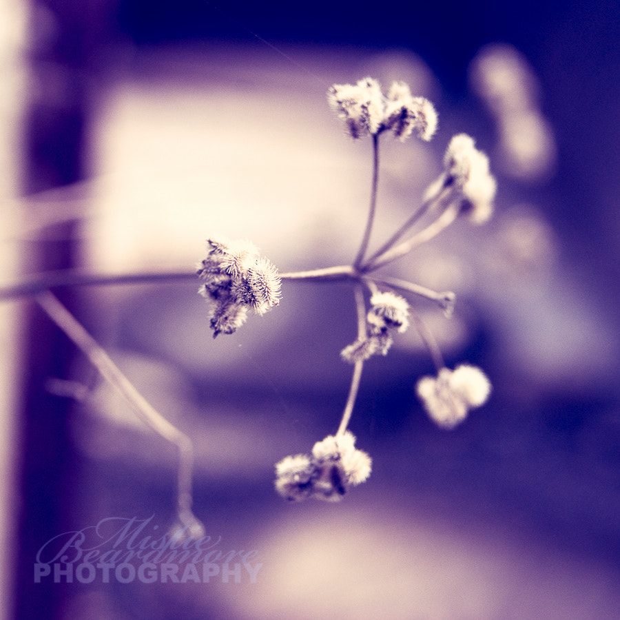 Photograph Weeds. by Mistie Beardmore on 500px