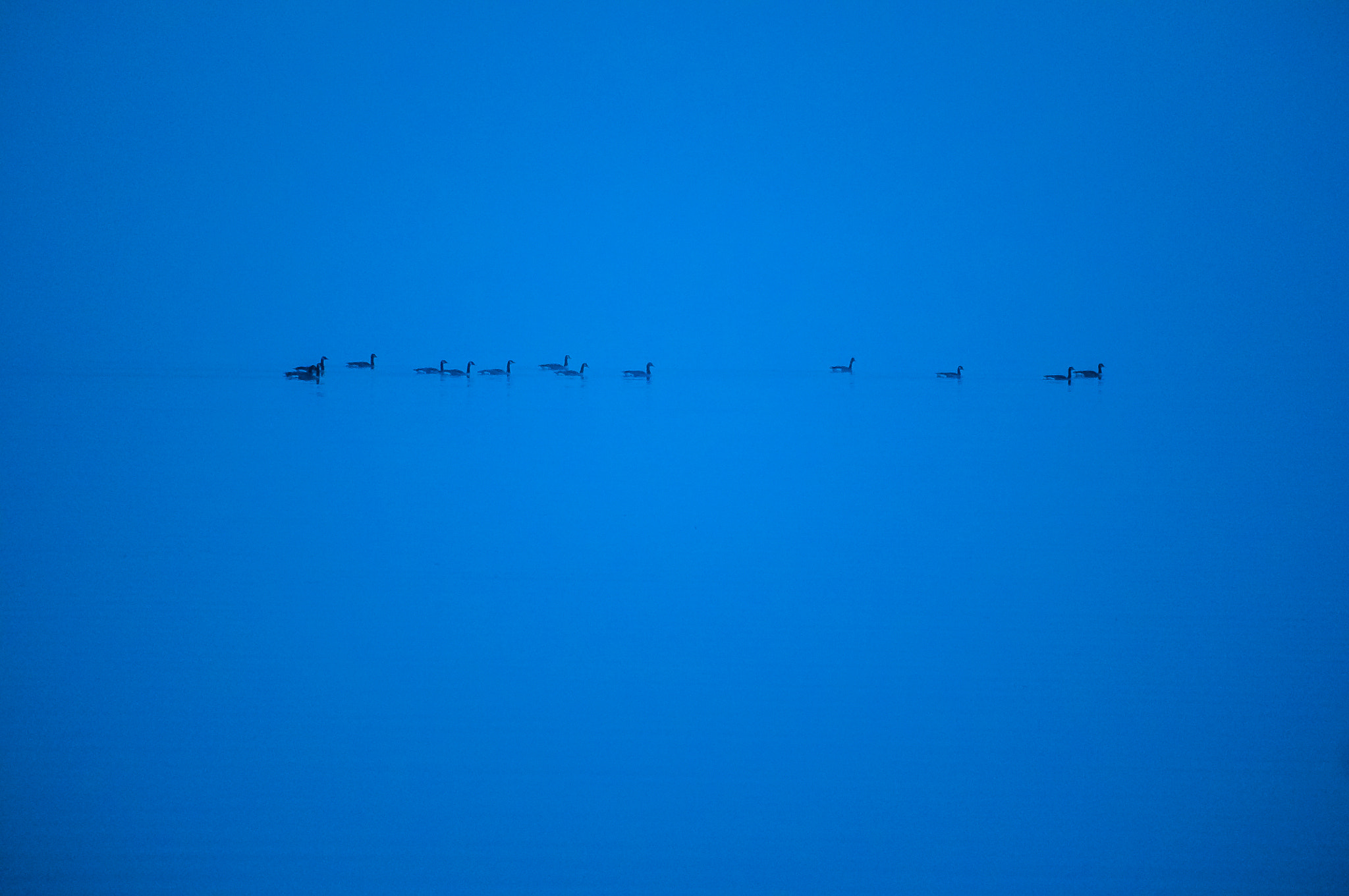 Photograph Distant Geese by Nick Tsouroullis on 500px