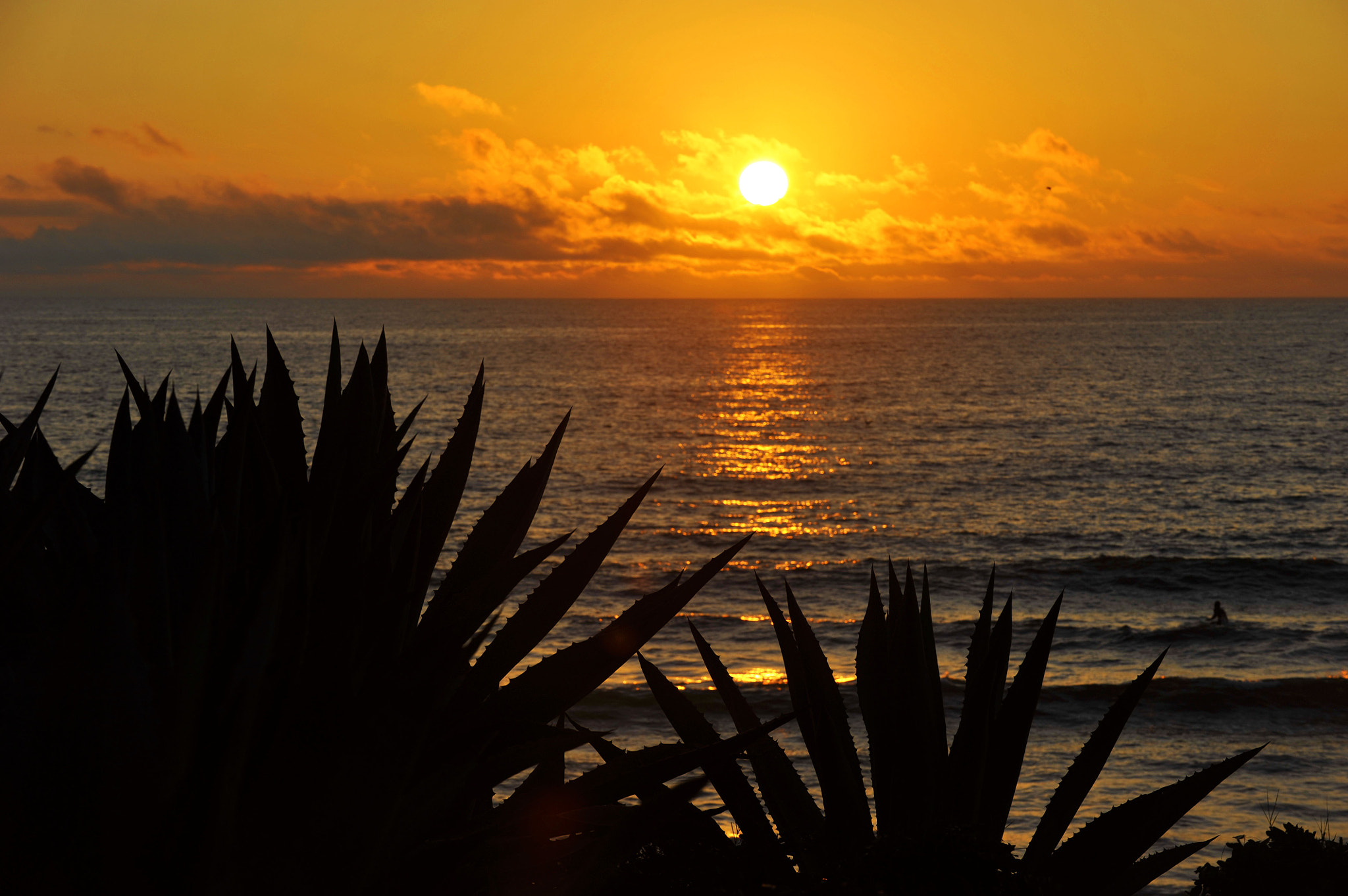 Photograph Cactus at Sunset in Oceanside - December 6, 2012 by Rich Cruse on 500px