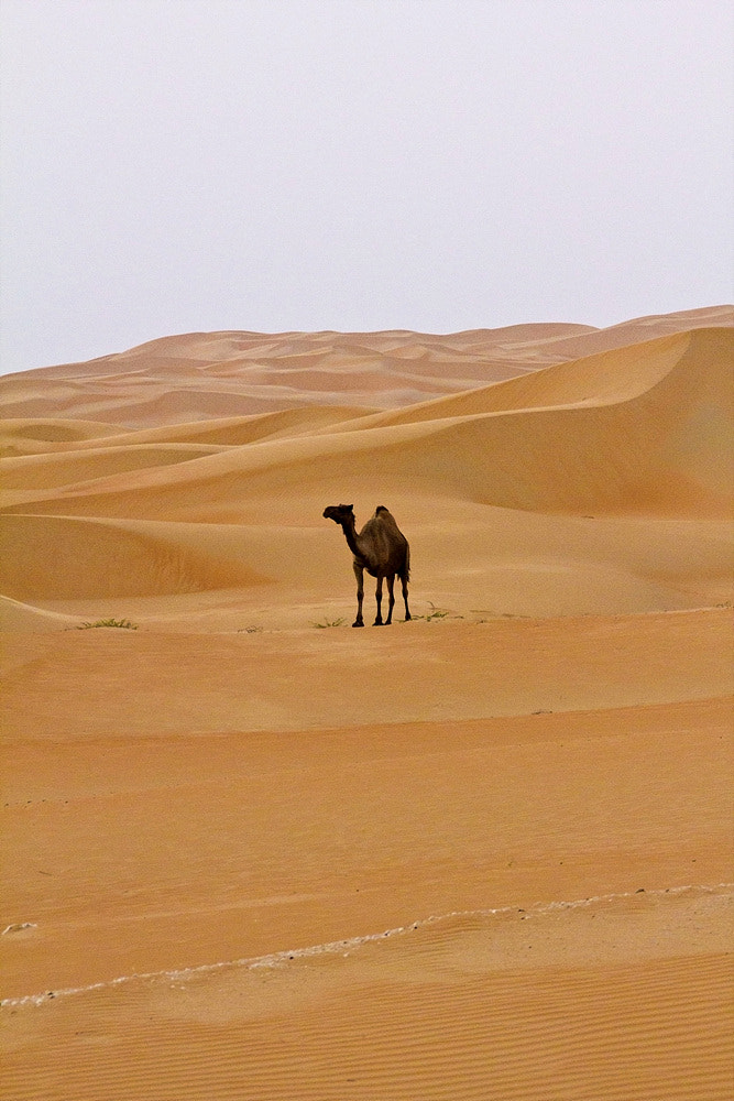 Photograph Camel.... III by Gwiyun Park on 500px