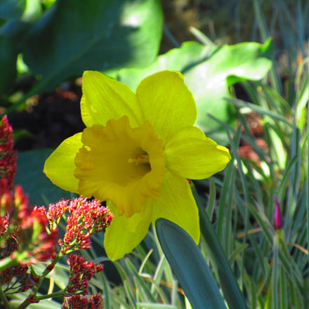 Yellow Flower, Canon POWERSHOT ELPH 170 IS
