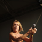Постер, плакат: IGGY POP AND THE STOOGES