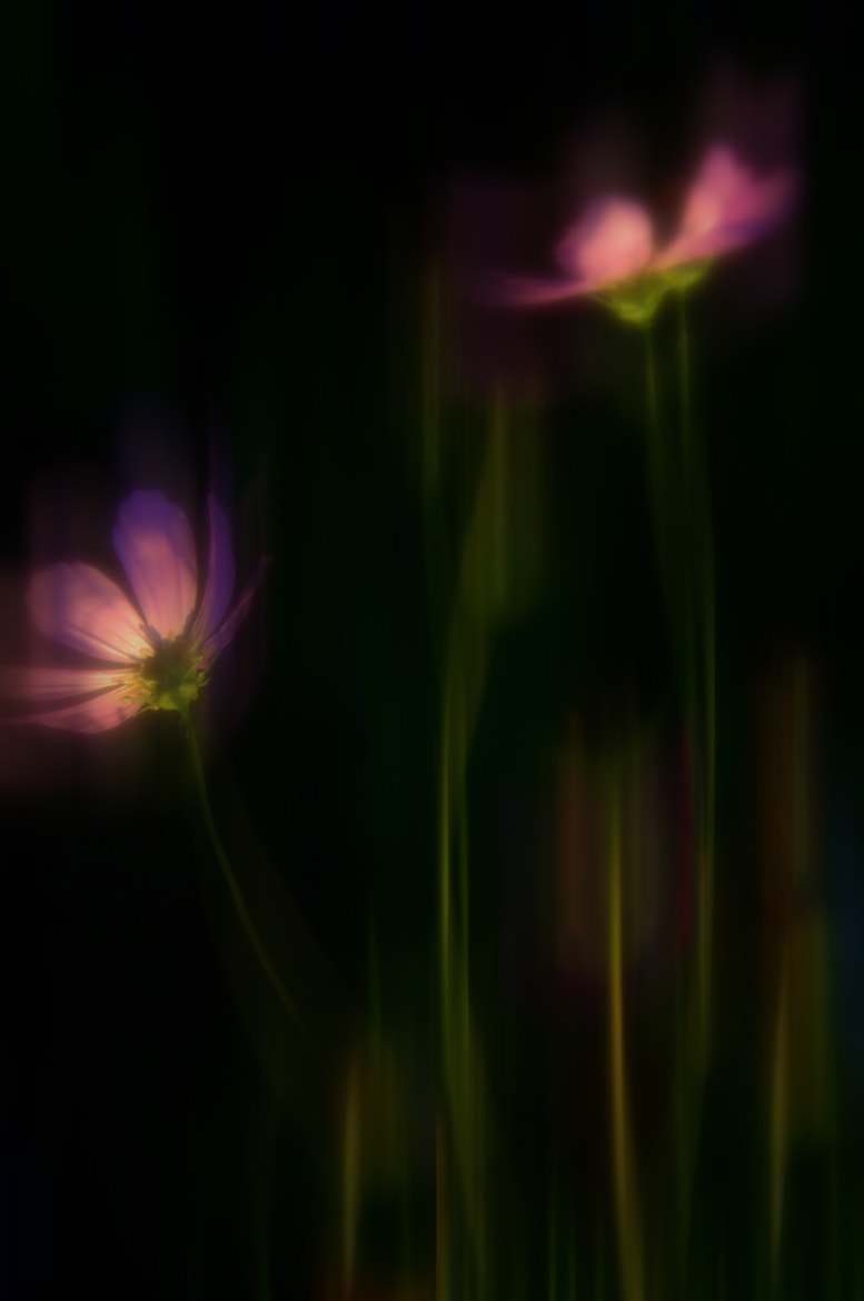 Photograph Whisper of flowers by larisa Fedotova on 500px