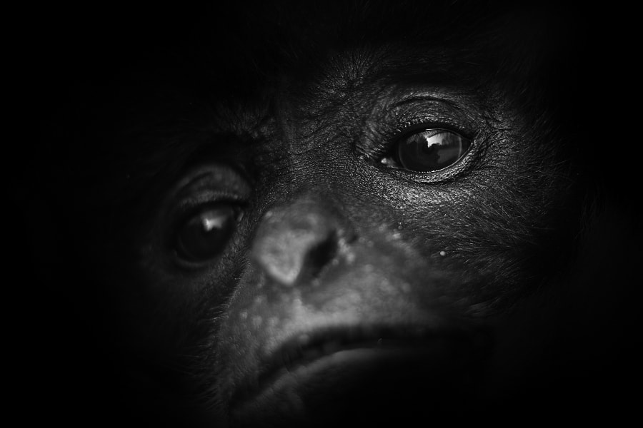 Photograph Lost stare by Stéphane ABCDEF on 500px