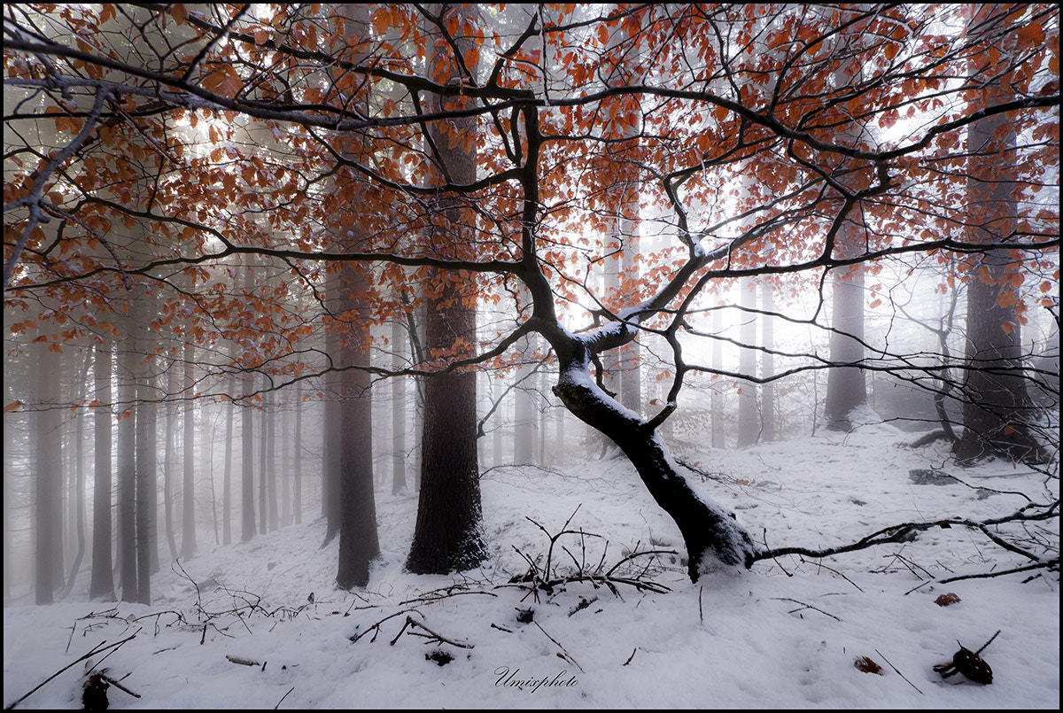 Photograph Winter Morning III. by Jaro Miščevič on 500px