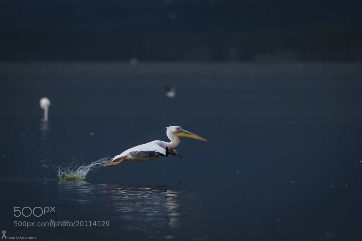 Photograph Heavy Take-off by Ahmad Al Maousherji on 500px