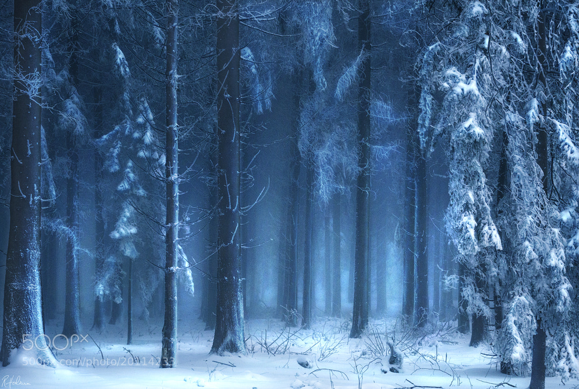 Photograph Winterwald by Robin Halioua on 500px