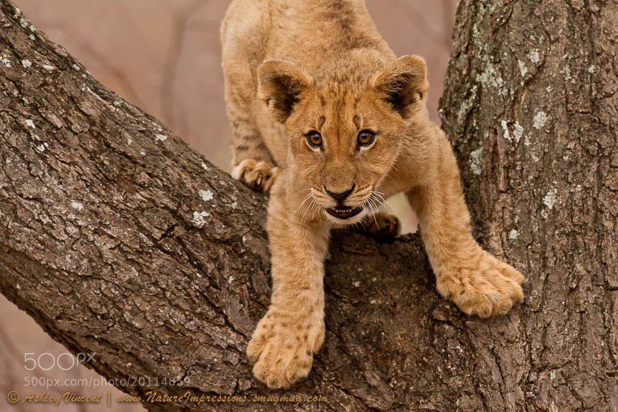 How Do I Get Down by Ashley Vincent