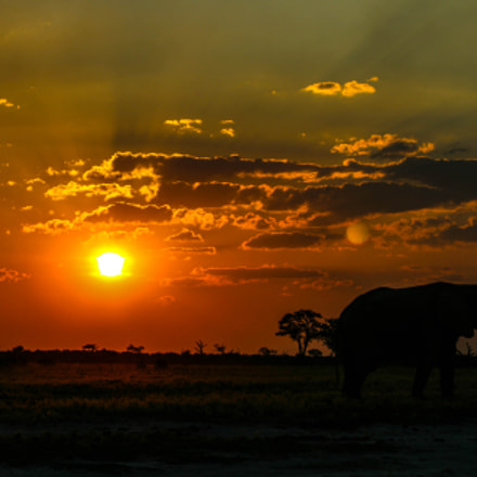 Elephant at Sunset, Savuti, Canon EOS DIGITAL REBEL XTI, Canon EF 75-300mm f/4-5.6 IS USM
