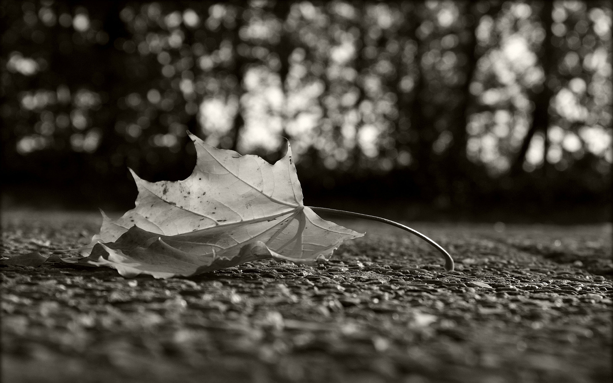 Photograph herfst by Marijke Van de Put on 500px