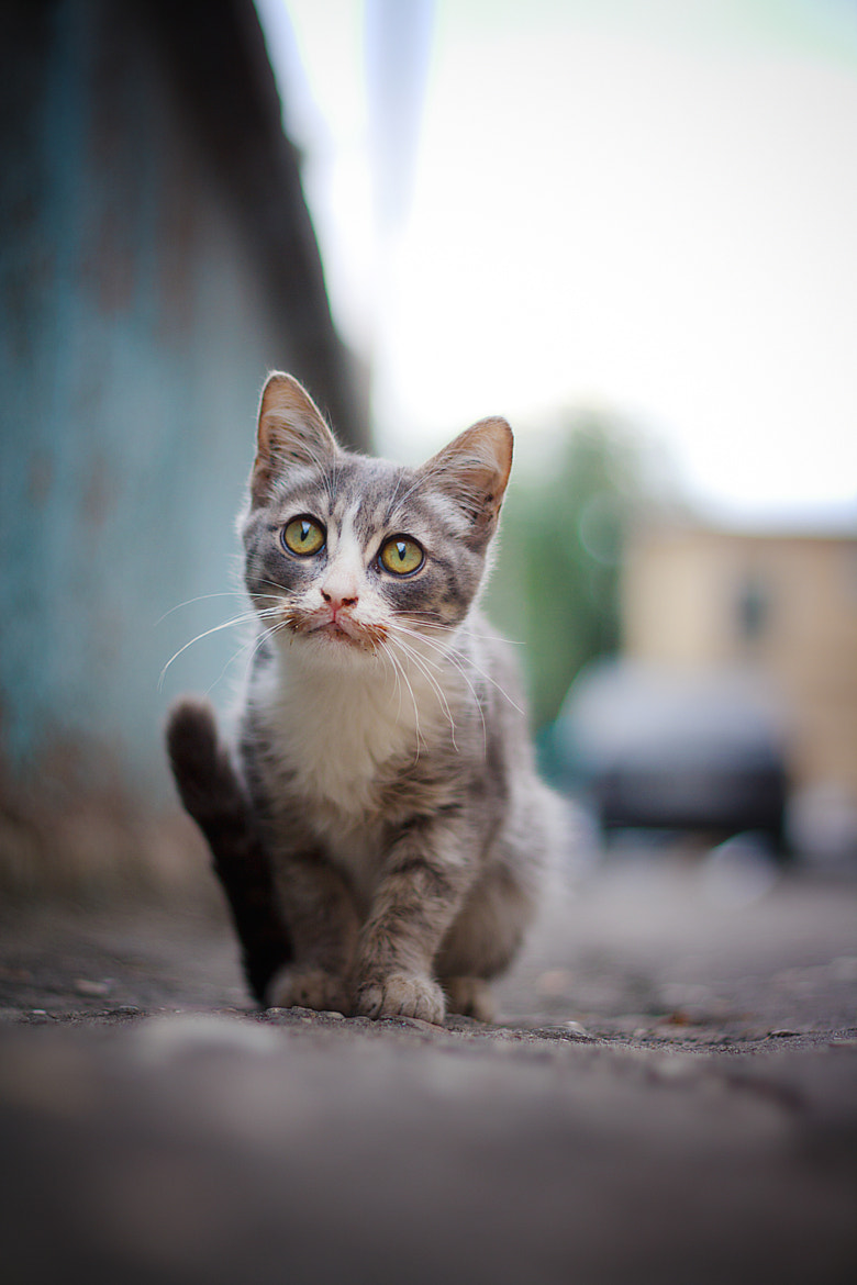 Photograph cat by Firko :) on 500px
