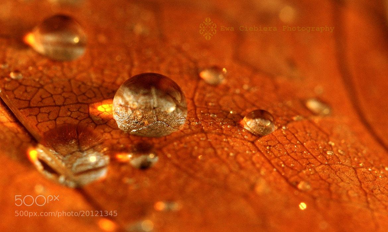 Photograph Drop on a leaf by EWA CIEBIERA on 500px