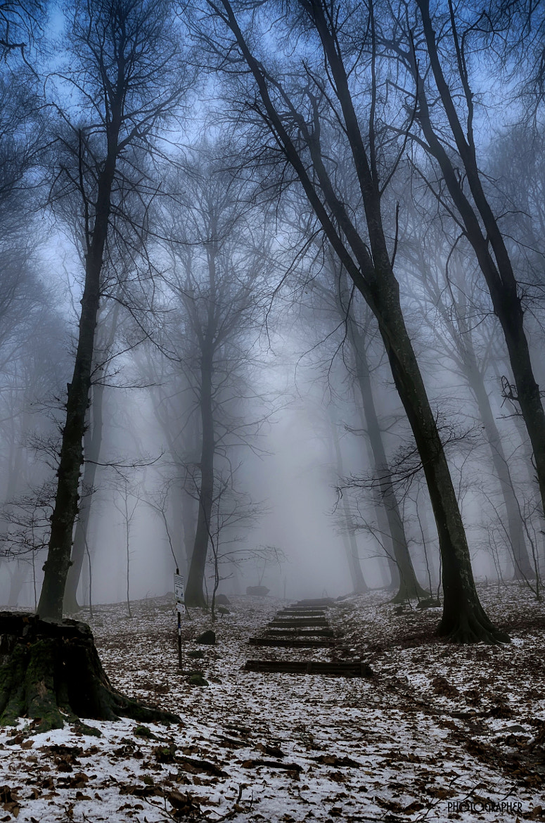 Photograph Walking in the fog by Daniele Forestiere on 500px