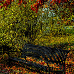 The End Of Fall by Harold Begun (HaroldBegun)) on 500px.com