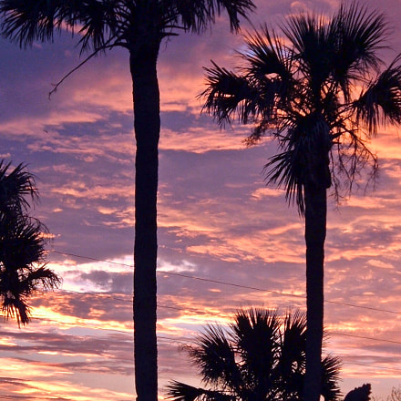 Palms at Sunset, Fujifilm FinePix A330