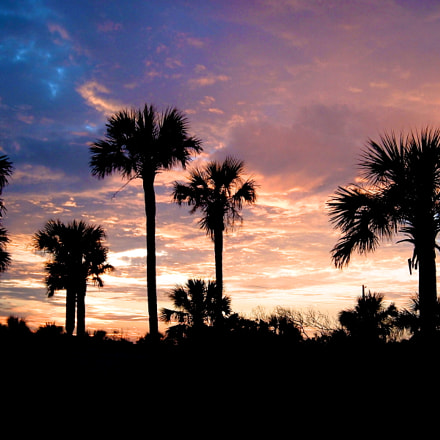 Palms at Sunset Landscape, Fujifilm FinePix A330