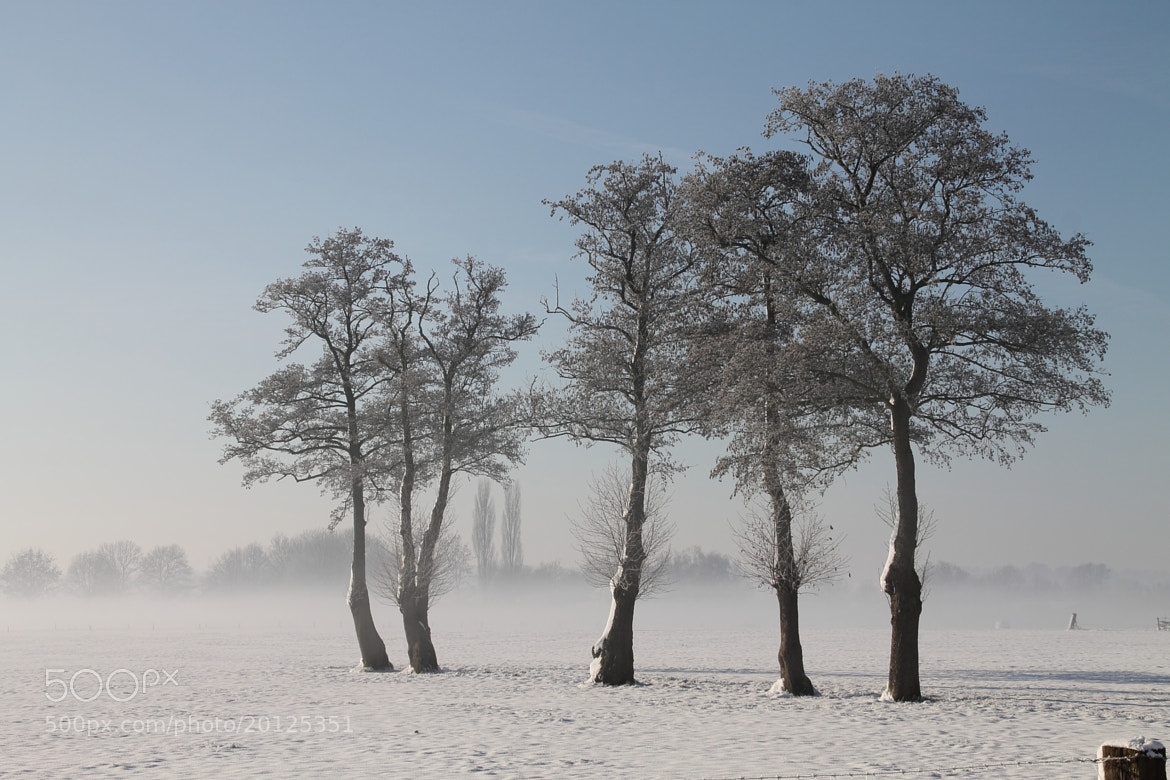 Photograph Trees aligned by Mathijs Vos on 500px