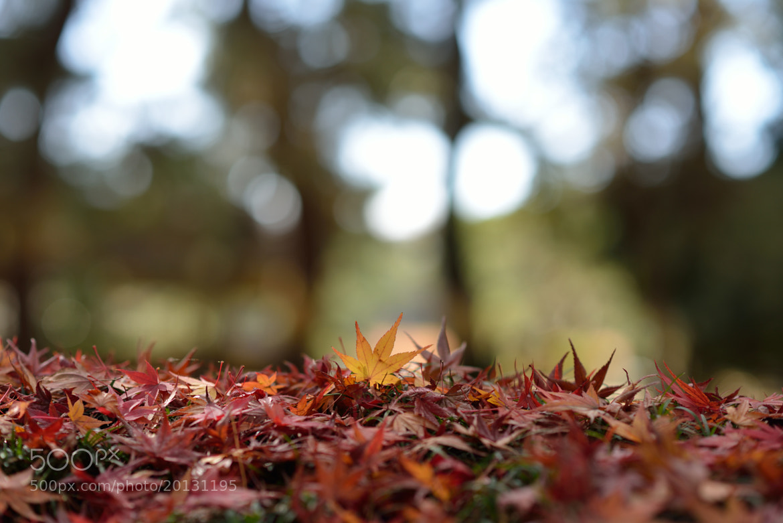Photograph  Autumn leaves by Tsuneaki Hiramatsu on 500px