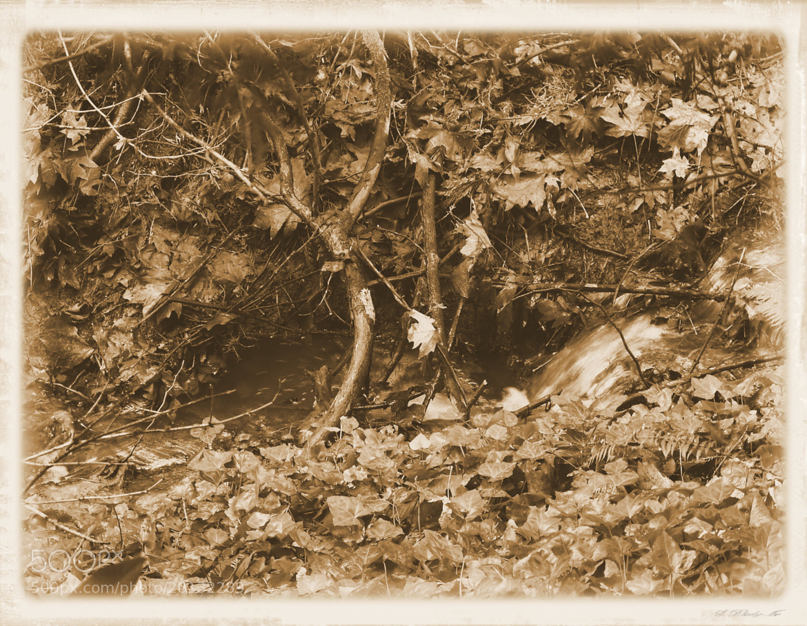 Photograph Fall in Sepia by Nancy Andersen on 500px