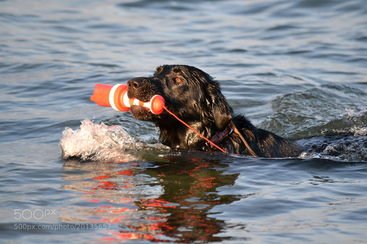 Photograph Fetch and Retrieval by Mee Ming Wong on 500px