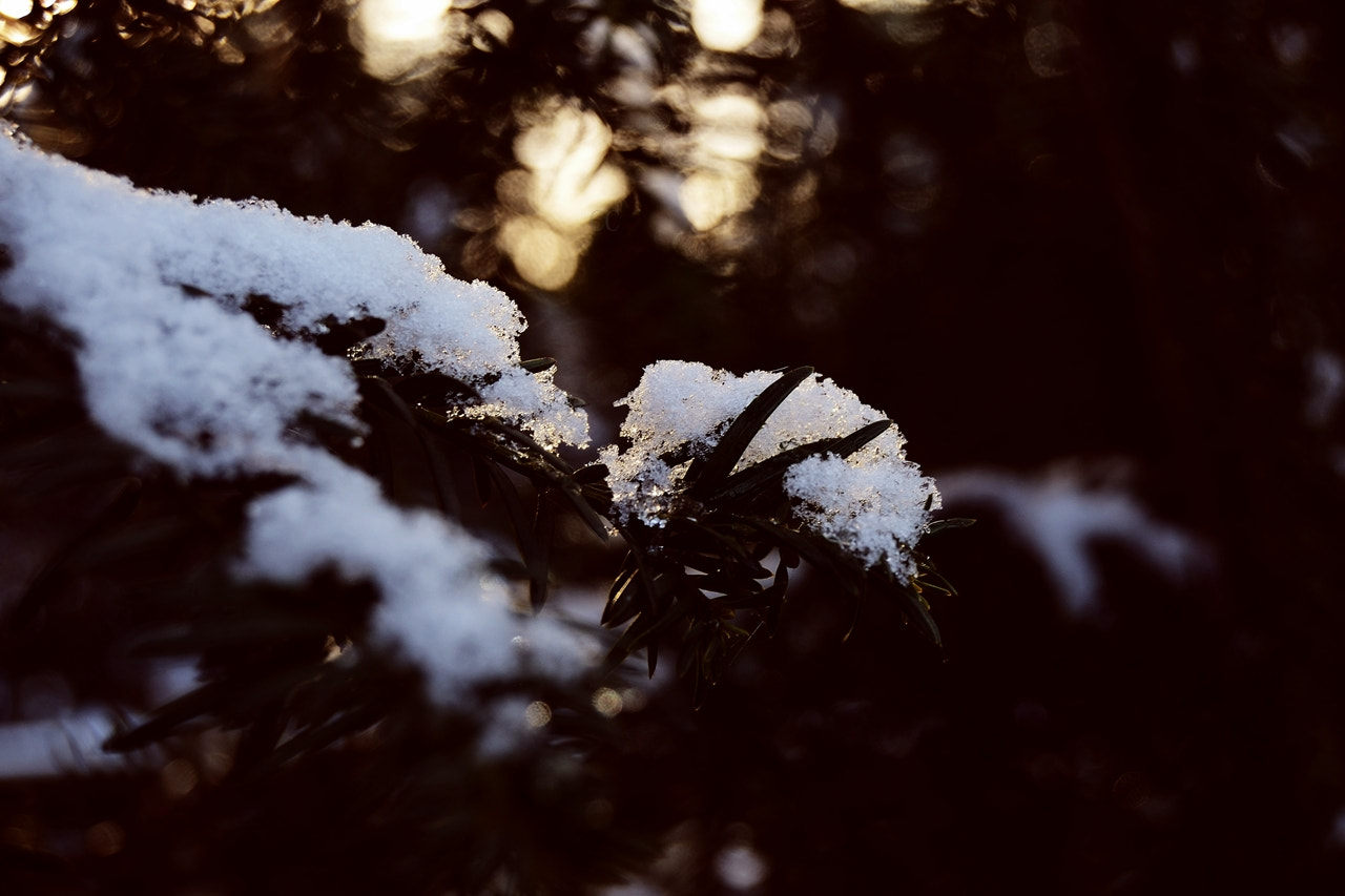 Photograph Snow! by Cristal  Caporale on 500px