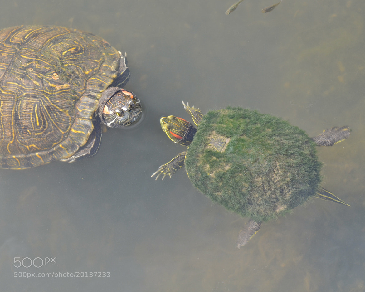 Photograph Turtle Friends by Steven Bach on 500px