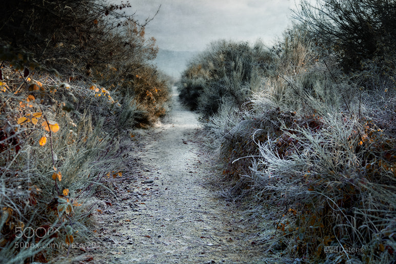 Photograph path with frost by Will Datené on 500px