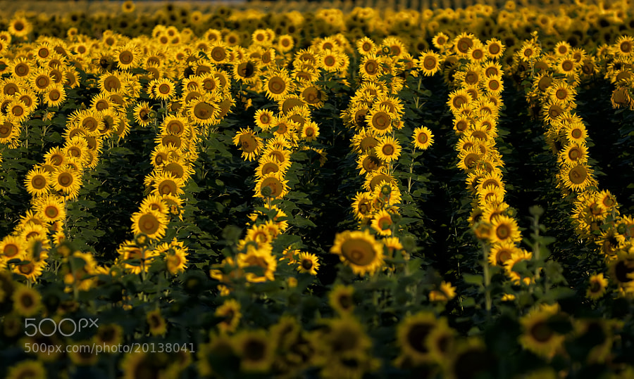 Photograph Summer's Pattern by Csilla Zelko on 500px