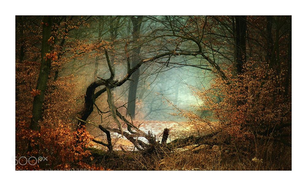 Photograph WaldLandschaft by Herbert_S on 500px