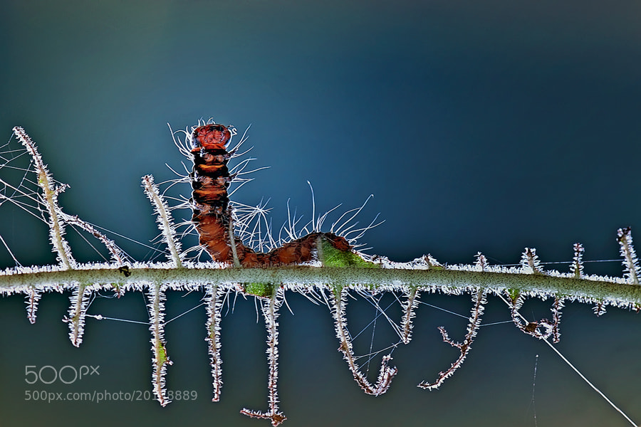 Photograph stand up by Budi Gunawan on 500px