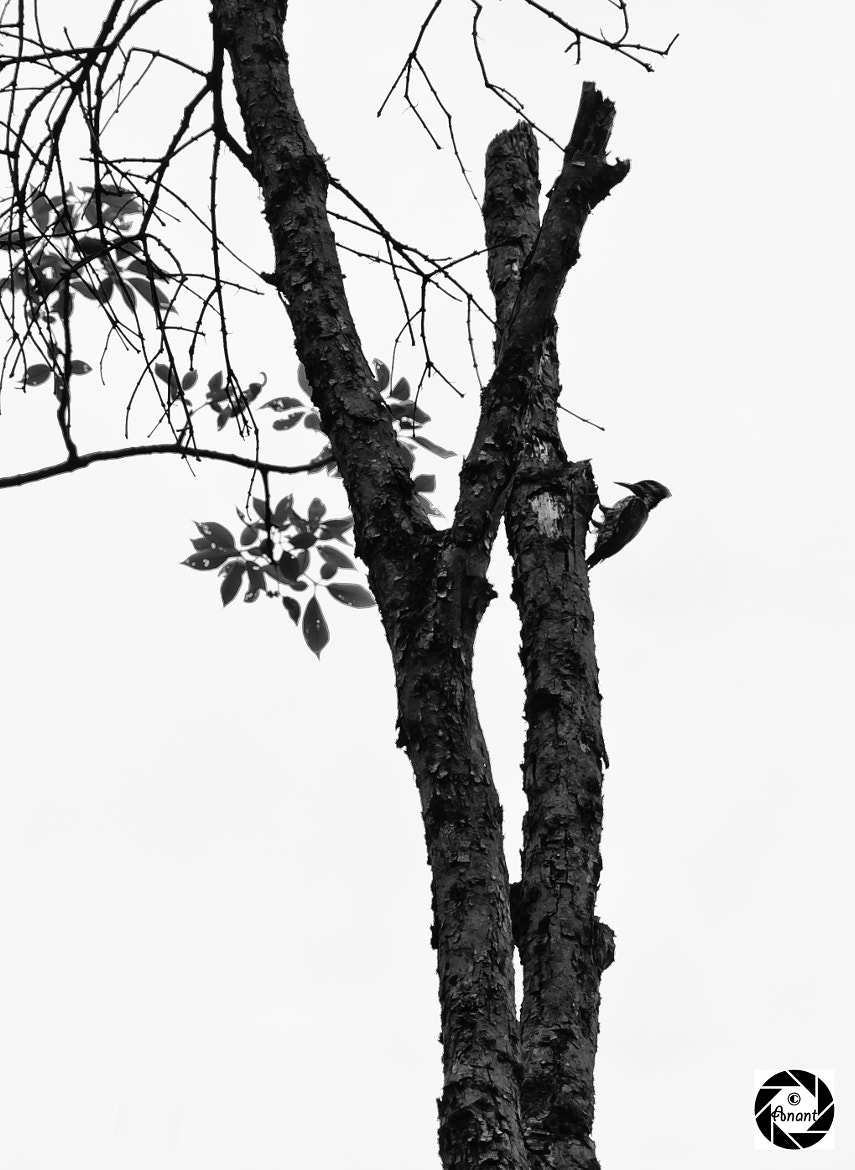 "Photograph ""Even the lonely woodpecker owes his success to the fact that he uses his head""~Joe Marcucci quotes by Anant Agarwal on 500px"